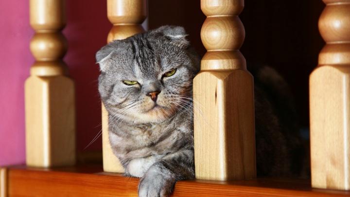 У них же лапки! Любуемся 10 артистичными котами, которые живут у читателей72.RU