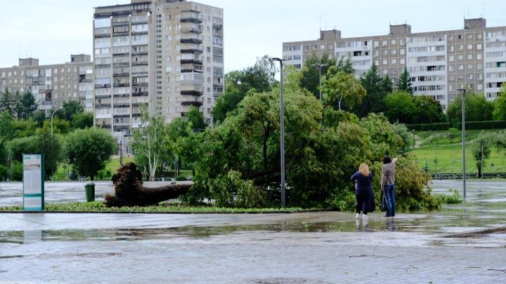Последствия шквалистого ветра в Перми: 10 самых говорящих фотографий