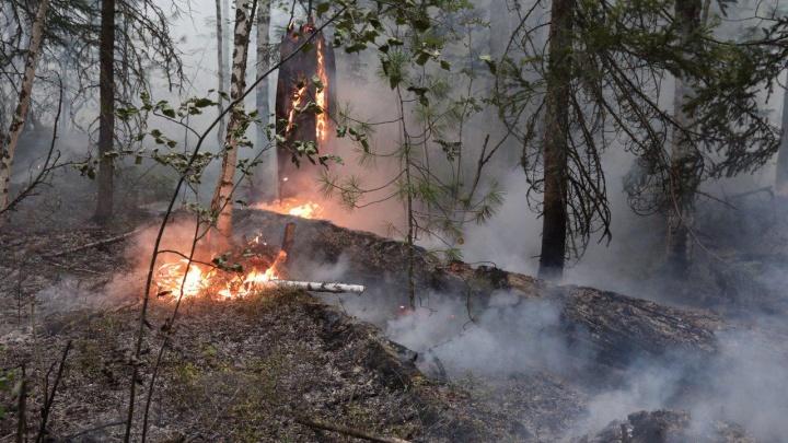 За сутки на горящий лес в крае вылили 600 тонн воды. Певица Монеточка собирает деньги на тушение