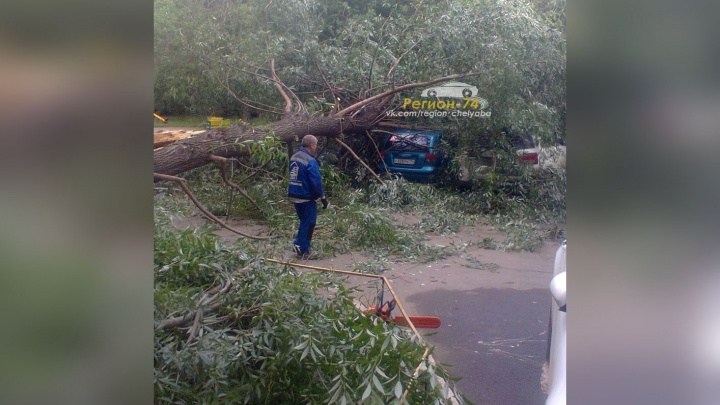 «Заявку подавали ещё в марте»: упавшее в челябинском дворе дерево придавило три машины