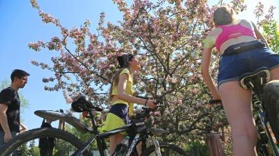 Не сакура и не слива: любуемся цветением декоративной яблонив уфимском парке
