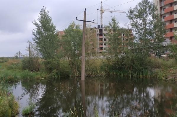 Вот у этого пруда так любят гулять жители Демы