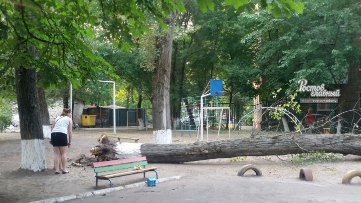 На территории ростовского детского сада рухнуло дерево