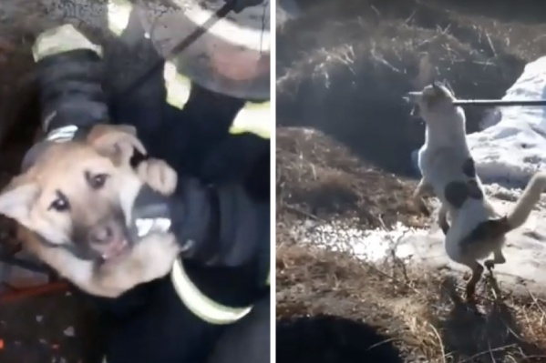 Щенок застрял под бетонной плитой и звал на помощь. Вытащить собаку из колодца удалось специальной палкой с крючком. Животное тут же отпустили на свободу