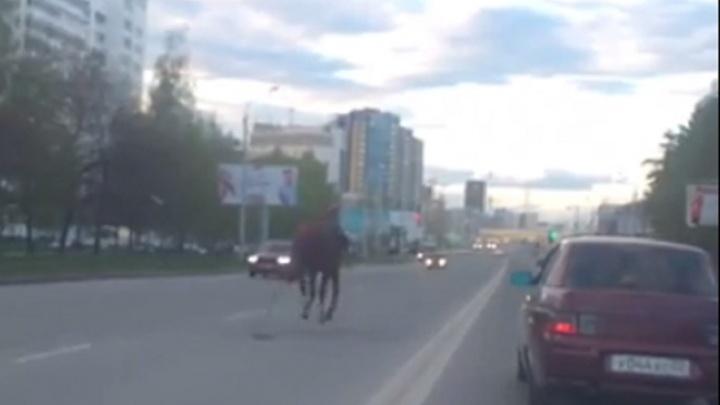 В Уфе посреди улицы бегала лошадь