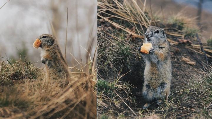 Милые суслики и серьезный олень: девушка собрала коллекцию снимков животных с Татышева