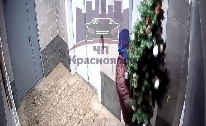 Полицейские вычислили укравшего елку из подъезда парня