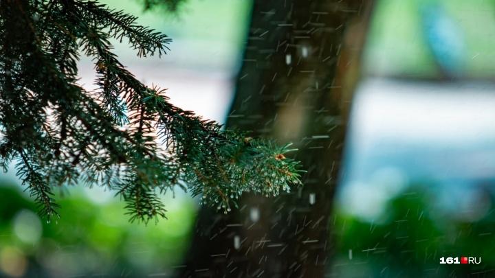Осень вступила в свои права: всю неделю в Ростове ожидаются дожди