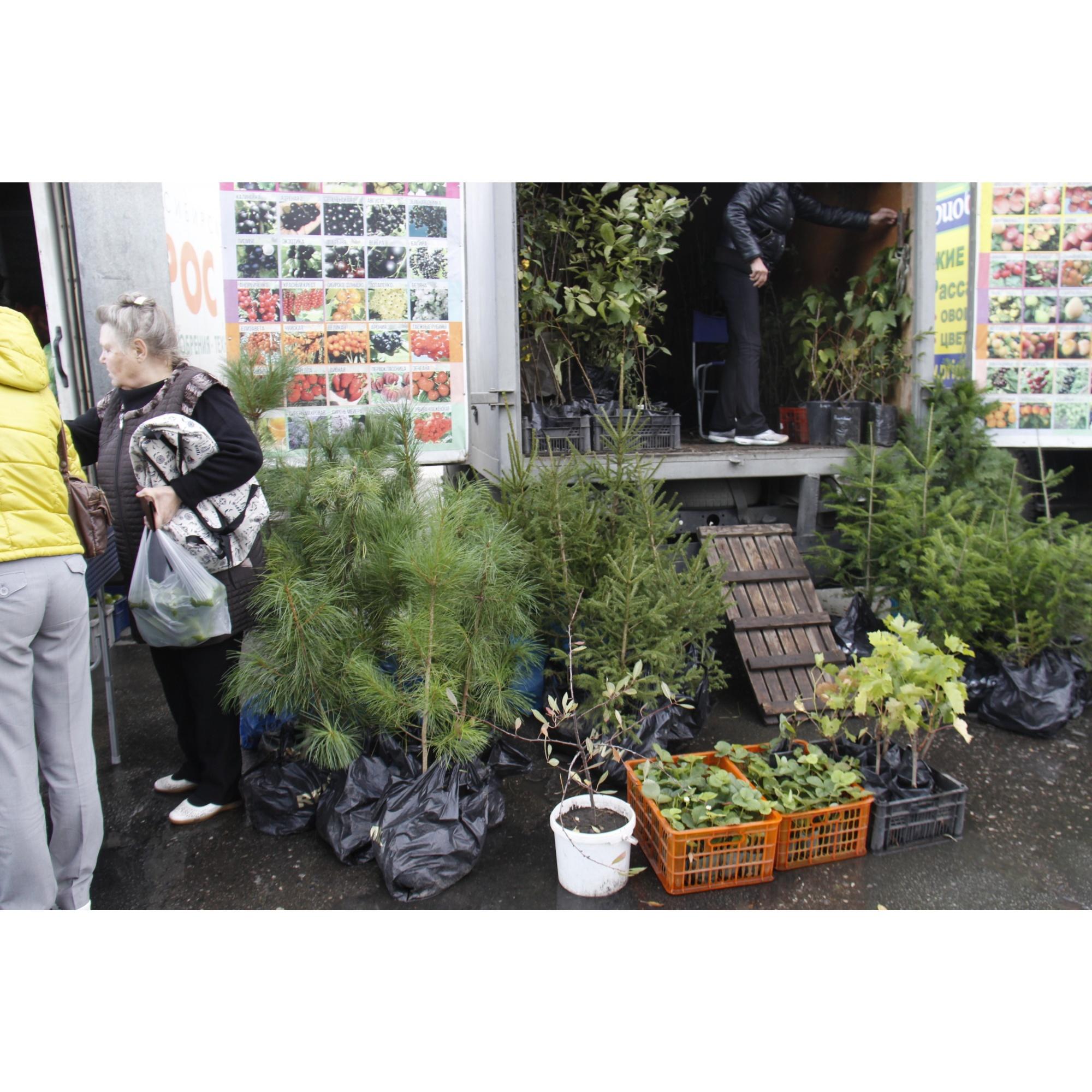 Питомник продает саженцы деревьев