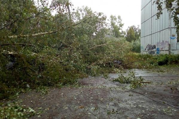 Убрать упавшие деревья и устранить те обрывы, где кабель находится под напряжением, — главная задача на текущий момент
