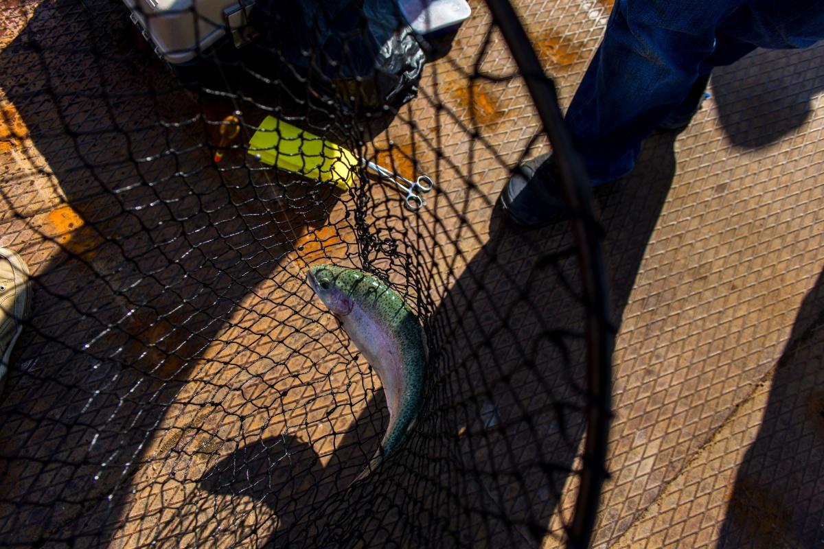 Рыбу нельзя ловить сетью без особого разрешения