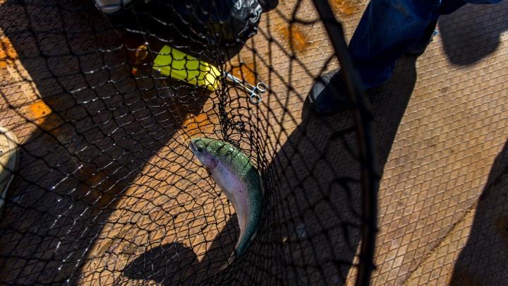 И рыбку съесть, и сесть: на пенсионера, пойманного на Увильдах с уловом, завели уголовное дело
