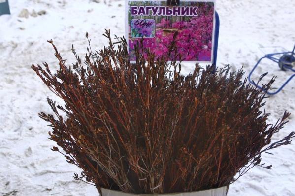 Букет можно купить возле станции метро «Заельцовская»