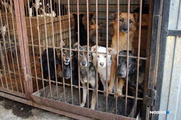 По официальным данным, в САХе сейчас должны находиться 550 собак, но там их на сотню меньше