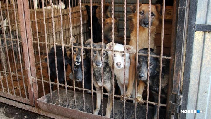Из статистики омского «Спецавтохозяйства» за апрель исчезло сто собак