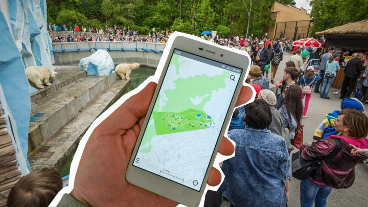 Мобильное приложение Новосибирского зоопарка вернули в App Store и Google Play