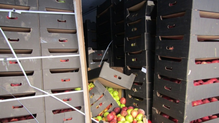 Яблоки на снегу: на Южном Урале уничтожили 20 тонн польских фруктов