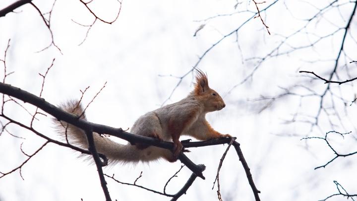 Милые белки ищут орехи и ждут лакомства от прохожих: ростовские пушистики — в фоторепортаже 161.RU