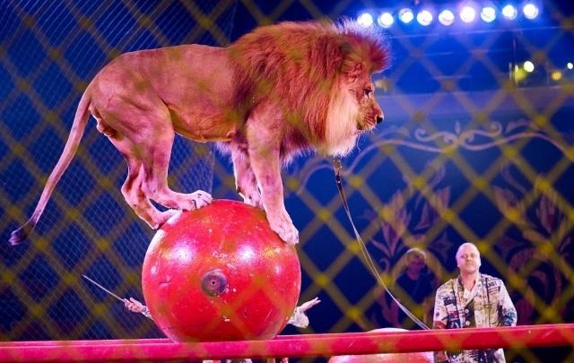 Уфимский цирк приглашает на Экстрим-шоу братьев-близнецов Шатировых