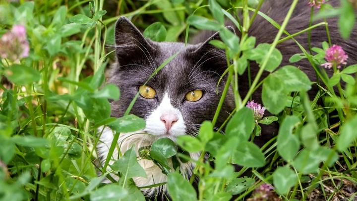 Уличные бродяги, наши симпатяги: 12 колоритных котиков Нижнего Новгорода