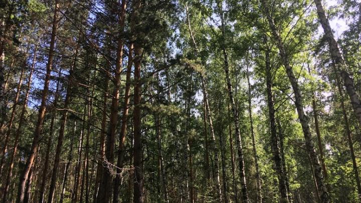 Полицейские нашли блуждавшую 6 дней по лесу женщину