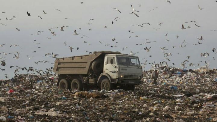 Занижали выбросы: «ГорЭкоЦентр» обязали заплатить 25 миллионов за вред экологии от свалки