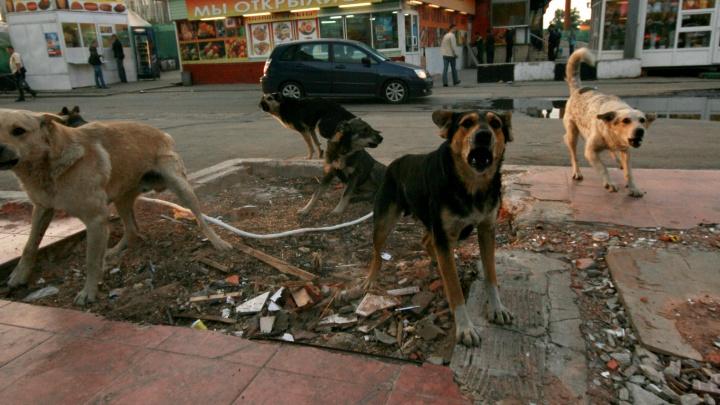 «Это западная мода»: отловщикам бездомных зверей запретят убивать бродячих собак и котов