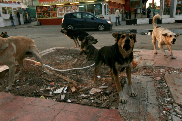 Теперь с потерявшимися собаками нельзя будет жестоко обращаться