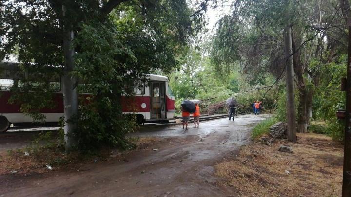 Рухнувшее дерево изменило маршрут трамваев в Волгограде