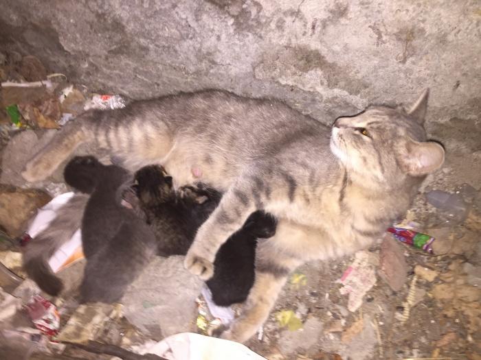 В бетонном кармане, помимо мусора, оказалась кошка и пять котят