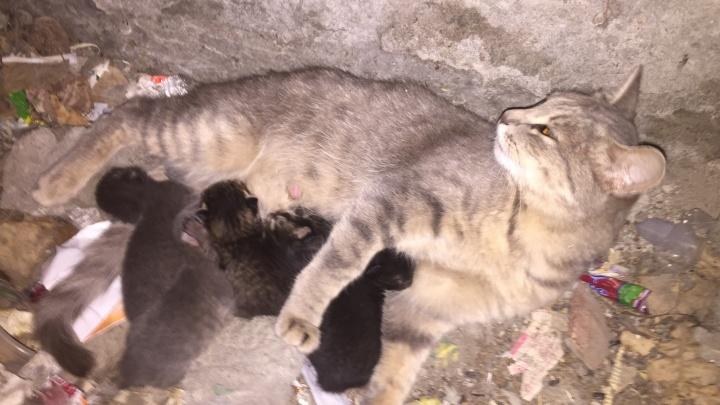 Видео: новосибирец спас из-под земли кошку с пятью крохотными котятами