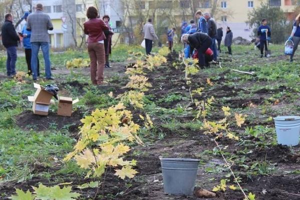 Жители района поддержали идею, на высадку саженцев пришли более 50 человек