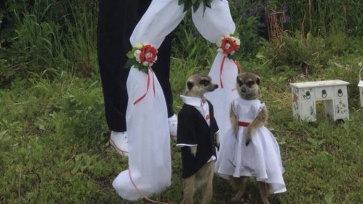 Ведущий Джон Уоррен поженил пермских сурикатов-блогеров — свадьба войдет в шоу «Поедем, поедим!»