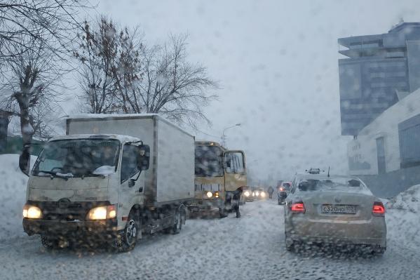 В этом году зима удивляет аномальным теплом и даже дождями