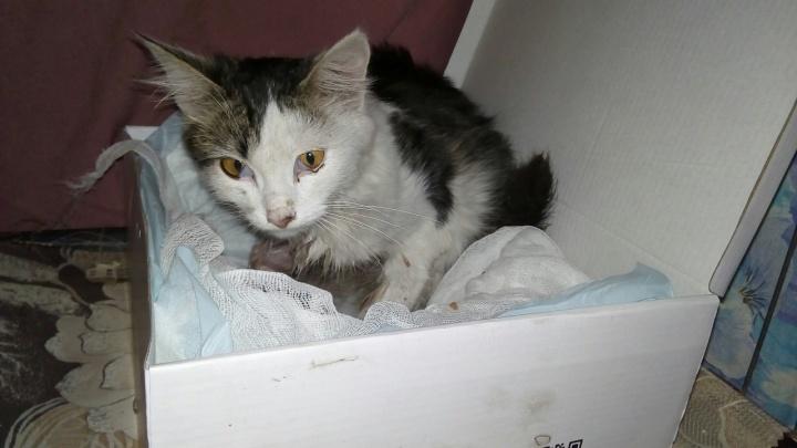 Залезла под капот: в Башкирии зоозащитница спасла и выхаживает кошку, покалеченную двигателем