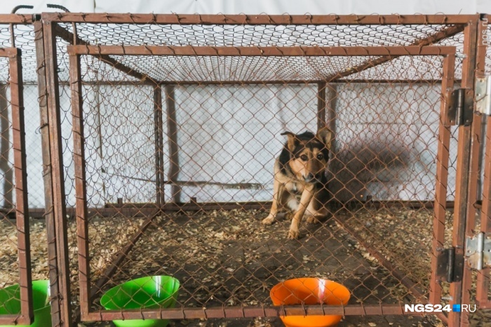 ВКрасноярске истратят 2,5 млн руб. наотлов неменее 600 собак