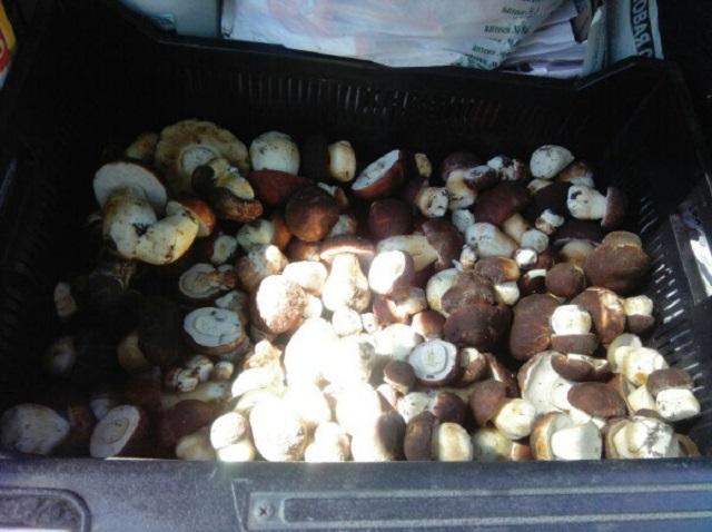 Курганцы хвастают урожаем, но не раскрывают грибные места
