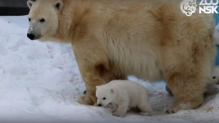 Посетителей зоопарка начали пускать к вольеру с белыми медвежатами