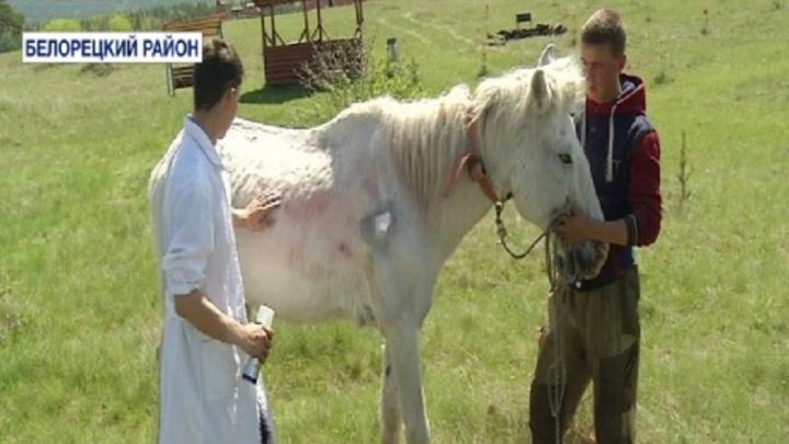 В Башкирии хулиганы разрисовали лошадь автомобильной краской