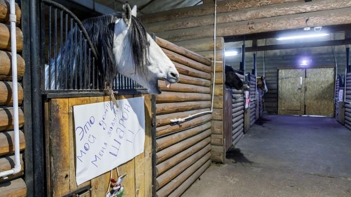 «Творится полный беспредел»: волгоградцы срочно вывезли лошадей из конюшни «Соснового бора»
