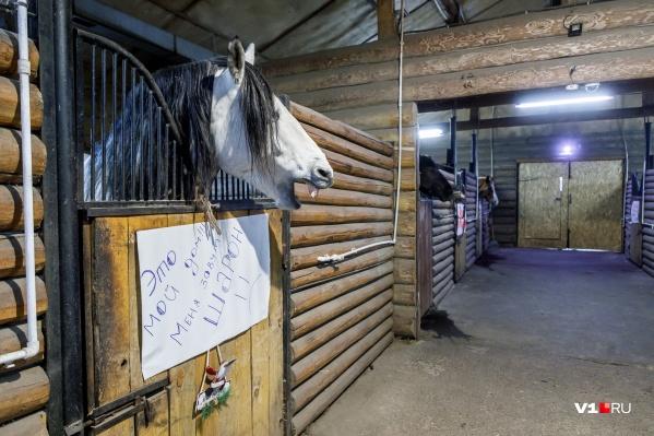 Лошади конноспортивного клуба все еще ждут решений судов