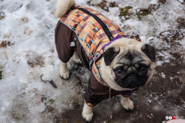 Так можно ли выгуливать собак в Саду Миндовского?