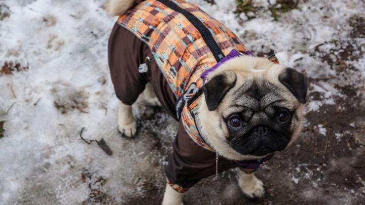 Прокуратура Индустриального района: запрещающие выгул собак таблички в Саду Миндовского — законны