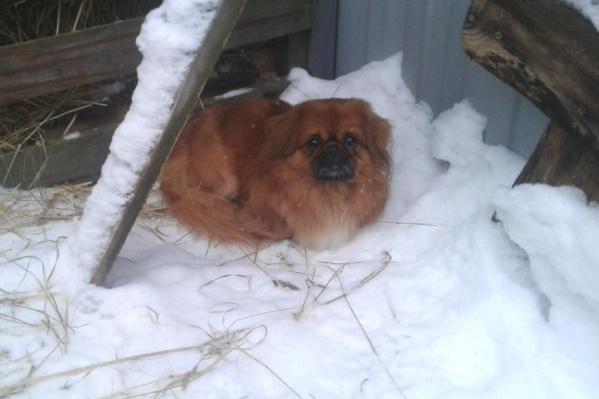 Собачка забилась в угол за сенником