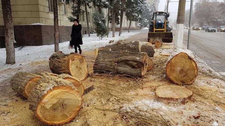 «Нынешнее руководство не может и не хочет остановиться»: волгоградец о безудержной вырубке деревьев