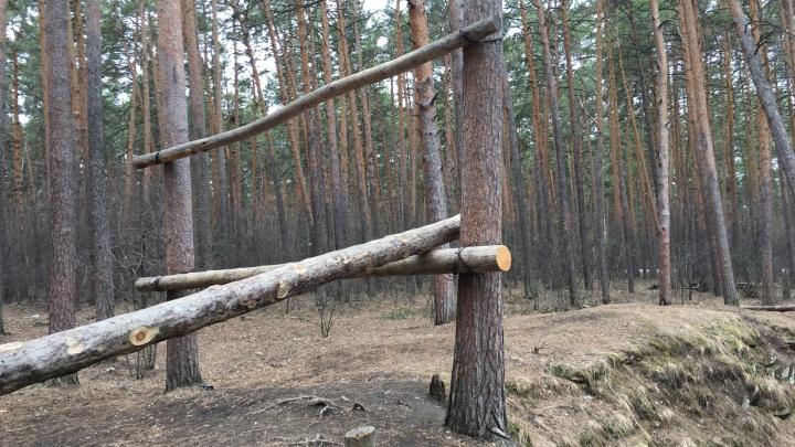 «Лес уже достаточно изуродовали»: челябинец обнаружил в городском бору примотанные к деревьям брёвна