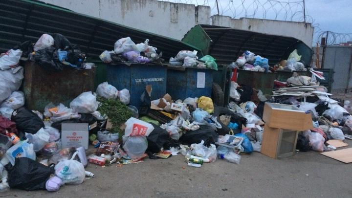 «Выбрасывать будет некуда»: 12 домов оставляют вообще без мусорной площадки после жалоб на грязь