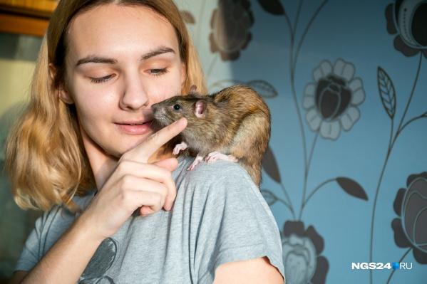 Крысы живут у Александры уже больше 5 лет