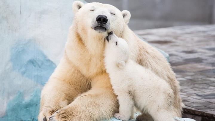 Белой медведице Герде — 10 лет: публикуем 5 лучших фото любимой новосибирцами именинницы