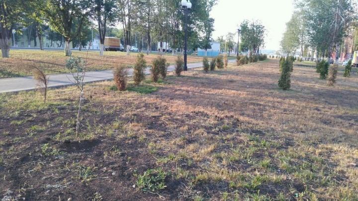 «Посадили и забыли?»: Минтранс попросил подрядчиков полить деревья на Московском шоссе